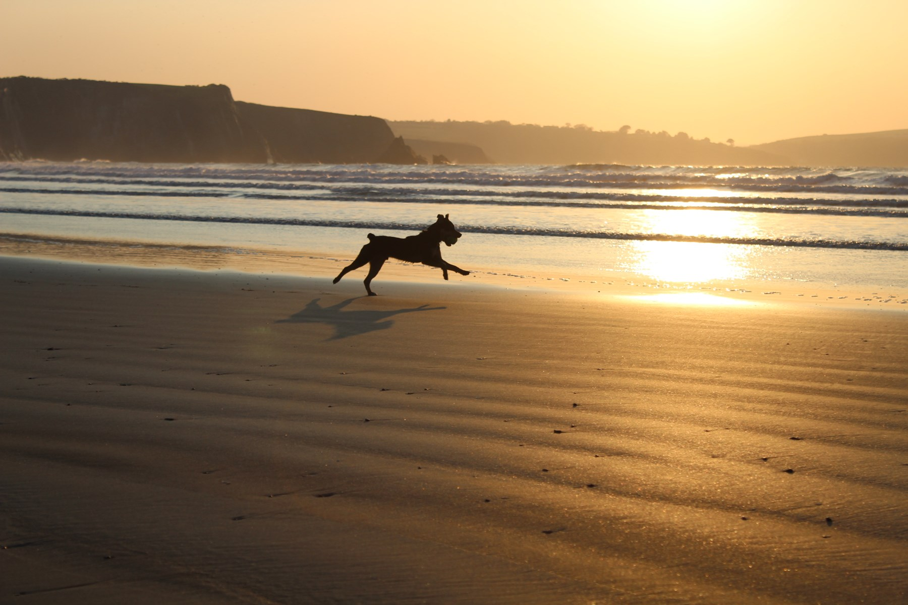 Dog friendly cottage holidays
